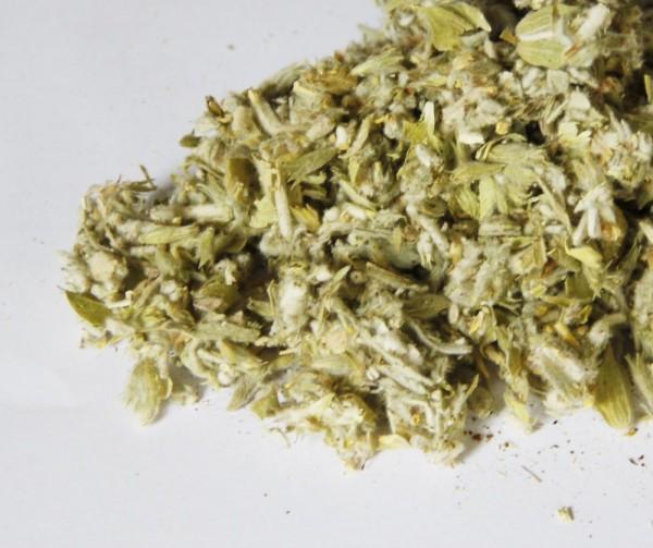 Griechischer Bergtee - Sideritis scardica - Griechisches Eisenkraut - Biotee